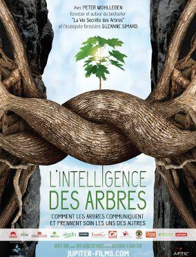 Samedi 28 Avril – Projection «L'intelligence des arbres»